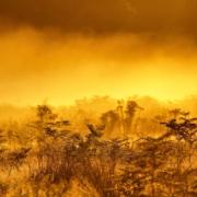 Richmond Park Mist